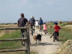 Vélo dans les marais